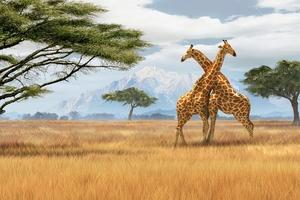 Отдых и туризм в Южной Африке