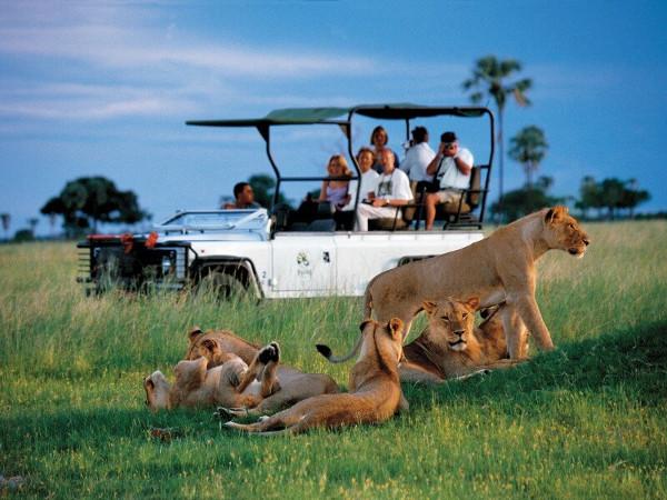Стоимость сафари в Танзании