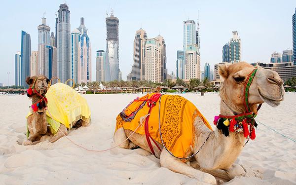 Знание арабского языка в Дубае